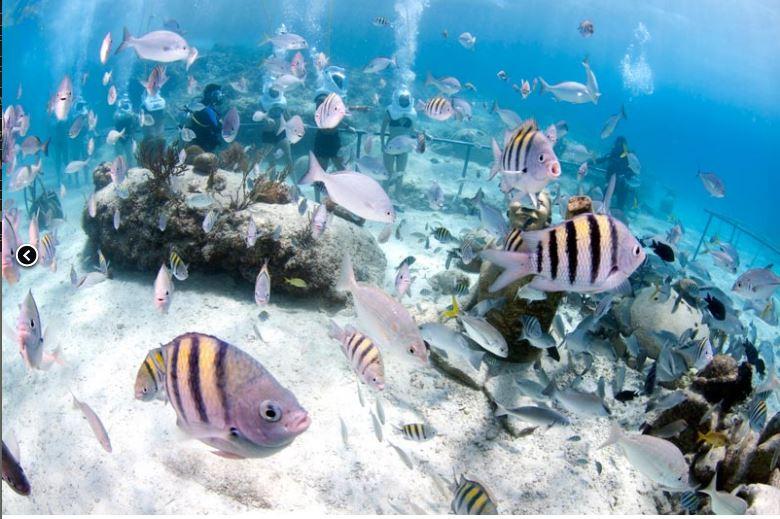 Sea Treck Spain
