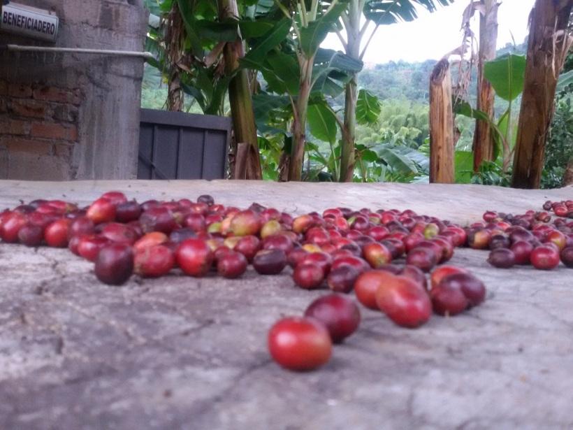 Cafe de colombia hacienda