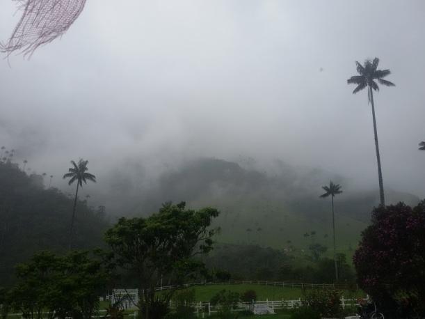 Valle del Cocora Colombia