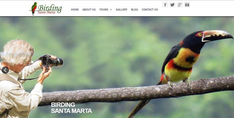 Birding Santa Marta
